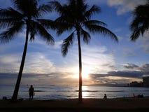 Dramatisk belysning av solnedgångar till och med kokospalmer över Waianae Arkivbild