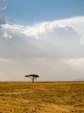 dramatisk ensam serengetiskytanzania tree Royaltyfri Foto