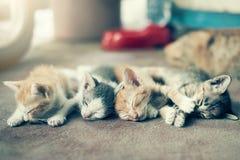 Dramatisk grupp för ögonblick A av den olika kattungen som sover på flooen Arkivfoto