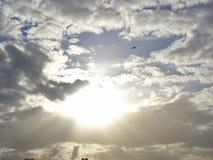Dramatisk himmel med fåglar och solen royaltyfria bilder