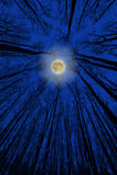 dramatisk natt Royaltyfria Foton