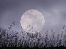 Dramatisk natthimmel med fullmånen och äng för halloween backg Arkivfoto