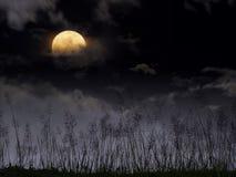 Dramatisk natthimmel med fullmånen och äng för halloween backg Arkivbild