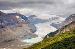 Dramatisk panoramautsikt av den Saskatchewan glaciären royaltyfria bilder
