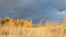 dramatisk sky Tunga mörkermoln Torrt gult gräs som tänds av solen, svänger i vinden Hösten landskap vänta för storm lager videofilmer