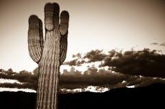 dramatisk solnedgång för kaktus Fotografering för Bildbyråer