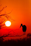 Dramatisk solnedgång i den Kruger nationalparken Sydafrika Arkivfoton