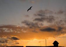 Dramatisk solnedgång med fågeln royaltyfri fotografi