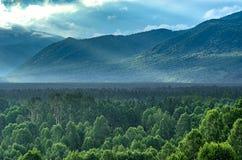Dramatisk soluppgång i bergen med den tjocka vintergröna skogen i förgrund, Altai berg, Kasakhstan Arkivbild