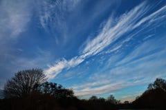 Dramatisk strimmig himmel med tunna moln och trädkonturer arkivfoto