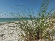 Dramatisk tom sandstrand i Nya Zeeland Royaltyfria Foton