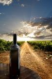 dramatisk vingård Royaltyfri Fotografi