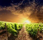dramatisk vingård Royaltyfri Bild