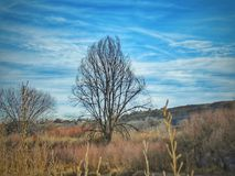 Dramatisk vinterhimmel över ensamt träd på sjöPueblodelstatsparken Arkivbild