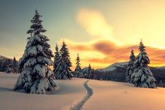 Dramatisk vintrig plats med snöig träd royaltyfri foto
