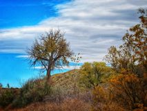 Dramatiska Autumn Sky Over Lone Tree på sjöPueblodelstatsparken Arkivbild