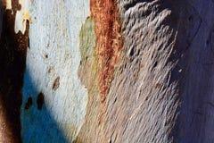Dramatiska kontrastera färger och rich texturerar närbild av trädskället arkivfoto