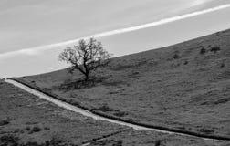 Dramatiska svartvita linjer med eken och moln Arkivbild