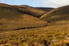 Dramatiskt landskap av Orkney öar Royaltyfria Foton