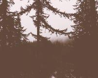 Dramatiskt skott av trädfilialer i en mörk skog royaltyfri bild