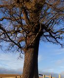 Dramatiskt träd, i Northumberland, England, UK Royaltyfri Bild