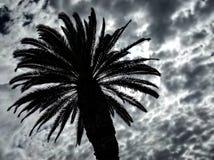Dramatiskt tropiskt gömma i handflatan och molnig himmel royaltyfria bilder