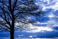 Dramatyczna scena z drzewem. Zdjęcia Stock