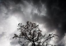 Dramatyczne chmury za drzewem Obrazy Stock