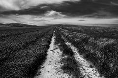 Dramatyczni czarny i biały pszeniczni pola, krajobraz fotografia royalty free