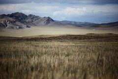 Dramatyczni Mongolscy Obszar trawiasty Obrazy Royalty Free