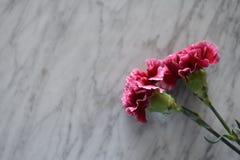 Dramatyczni różowi goździki zdjęcie stock