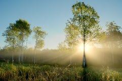 Dramatyczni słońce promienie w Mgłowej Osikowej łące Zdjęcia Stock