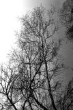 Dramatyczny drzewo Zdjęcie Stock