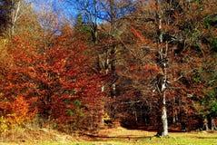 Dramatyczny jesień las Zdjęcie Royalty Free