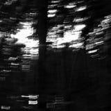 Dramatyczny monochromatic illustraton kopyto_szewski światło w sosnowym lesie w Machuv kraju regionie turystycznym podczas wakacj Zdjęcie Royalty Free