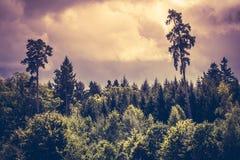Dramatyczny niebo i las Zdjęcia Royalty Free