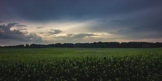 Dramatyczny niebo Nad Indiana polem uprawnym obraz royalty free
