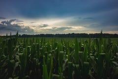 Dramatyczny niebo Nad Indiana polem uprawnym obrazy stock
