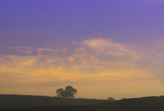 Dramatyczny niebo przy wschodem słońca i drzewo odludny Obrazy Royalty Free