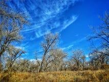 Dramatyczny zimy niebo Nad Cottonwood lasem przy Jeziornym osada stanu parkiem Obraz Royalty Free