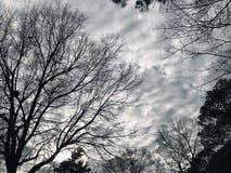 Drame d'hiver photographie stock libre de droits