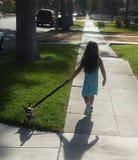 Drame de marche de chien Photos libres de droits