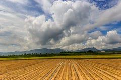Drame de récolte Photos libres de droits