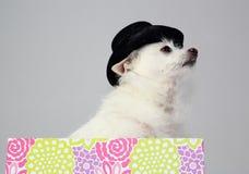 Dramma del cane Fotografia Stock