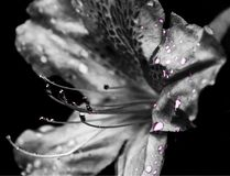 Dramma del fiore Immagine Stock