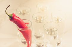 Drank met schoten van wodka en Spaanse peper wordt/Drank met schot wordt geplaatst geplaatst dat royalty-vrije stock fotografie