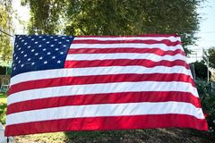 Drapeau américain avec des feuilles d'arbre à l'arrière-plan Image stock