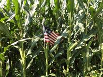 Drapeau américain sur la tige de maïs Photographie stock