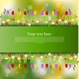 Drapeau avec l'herbe et les fleurs Images stock