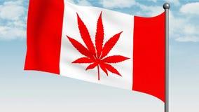 Drapeau canadien avec de marijuana de feuille la feuille d'érable à la place clips vidéos